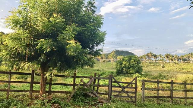 Fazenda com 430 hectares Proximo de Pedreiras - MA - Foto 5