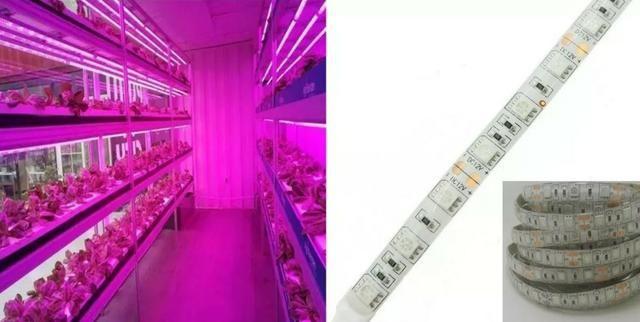 COD-CP325 1 Metro Fita Led Full Spectrum Indoor Grow 7red 1blue Cultivo Aquario Automação - Foto 2