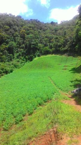 Lindo terreno de 2,8 hectares em Delfim Moreira Sul de Minas Gerais - Foto 8