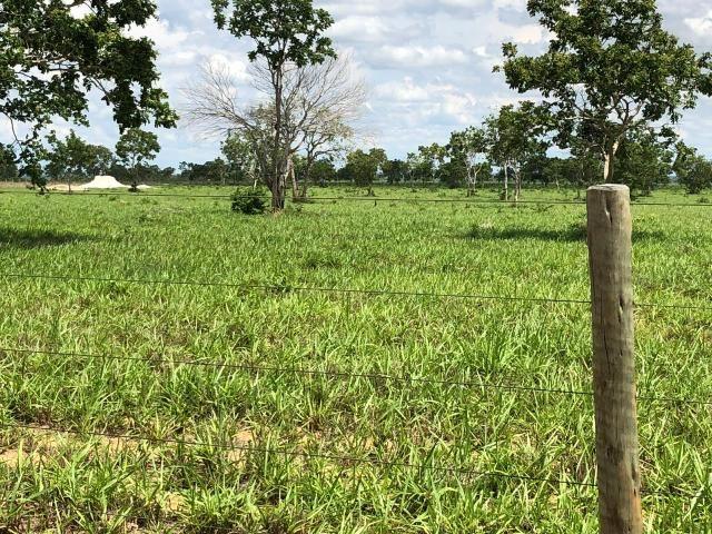 Fazenda 1.163 hectares em Livramento MT - Foto 5