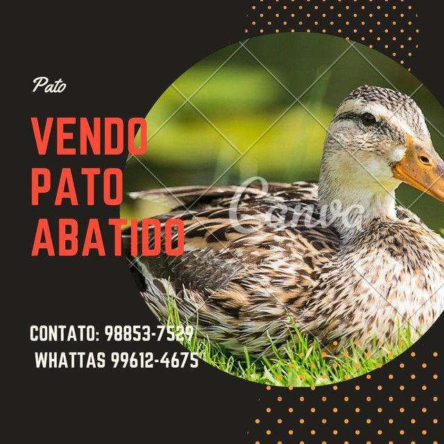 Vendo Pato