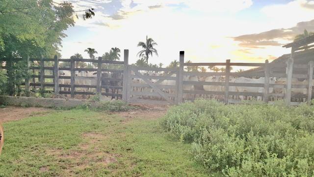 Fazenda com 430 hectares Proximo de Pedreiras - MA - Foto 8