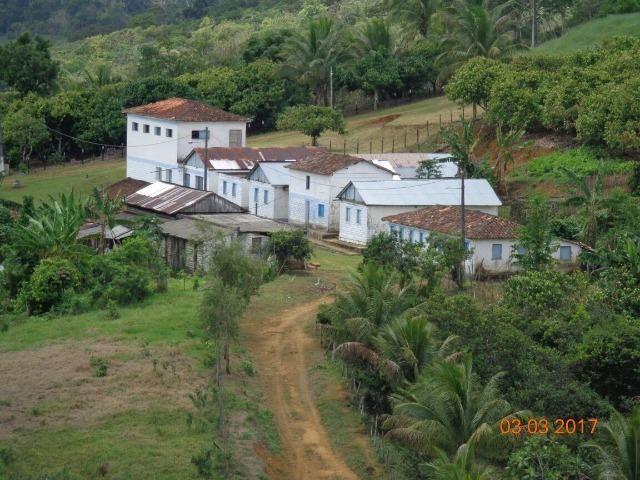 Vende fazenda de Cacau com 278 Ha - Camamu - BA
