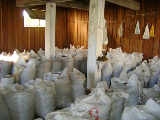 Vende fazenda de Cacau com 278 Ha - Camamu - BA - Foto 9