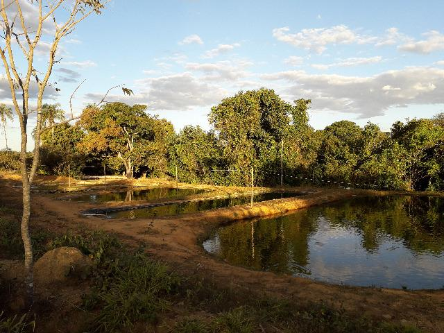 Fazenda à venda, por R$ 900.000.00 - Zona Rural - Luziânia/GO - Foto 6