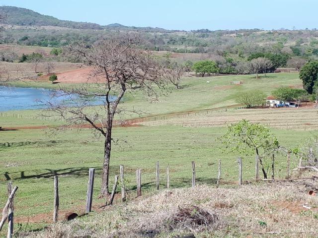 Fazenda em Campo Grande 4mil hectares!! - Foto 19