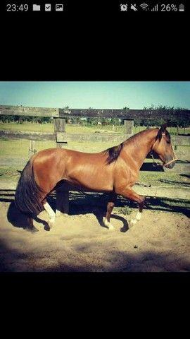 Vende-se Cavalo Crioulo Cuiudo