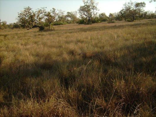 Fazenda com 10.250 hectares terra boa para plantio e pasto aceita 60% em permuta - Foto 2