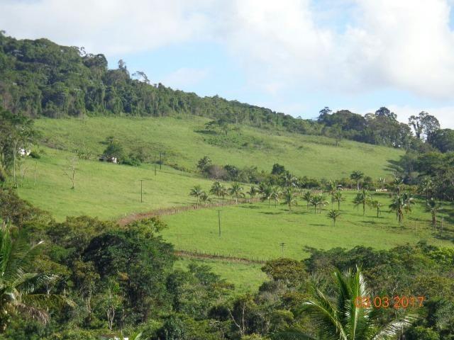 Vende fazenda de Cacau com 278 Ha - Camamu - BA - Foto 8