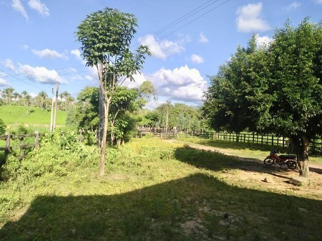 Fazenda com 430 hectares Proximo de Pedreiras - MA - Foto 9