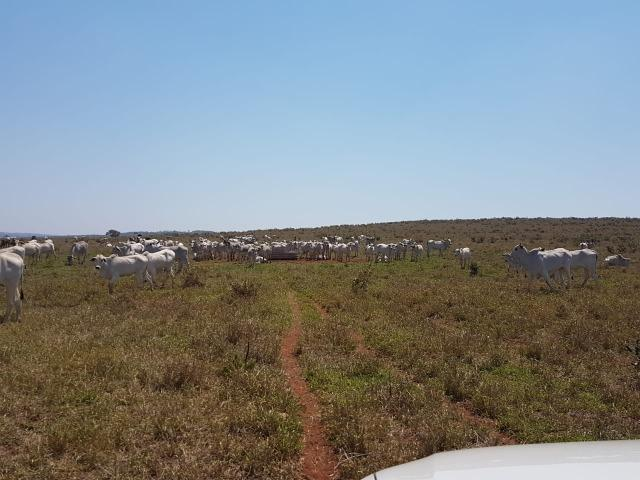 Fazenda em Campo Grande 4mil hectares!! - Foto 7