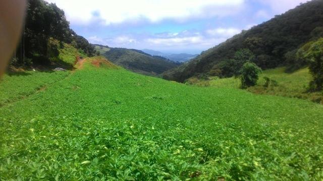 Lindo terreno de 2,8 hectares em Delfim Moreira Sul de Minas Gerais - Foto 9