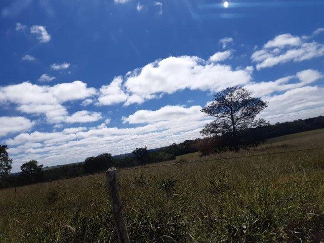 Fazenda de 386 hectares. São Gabriel do Oeste - Foto 14