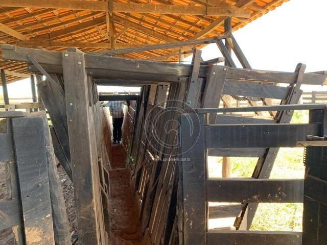 Fazenda 490 ha estrada de cáceres - Foto 12