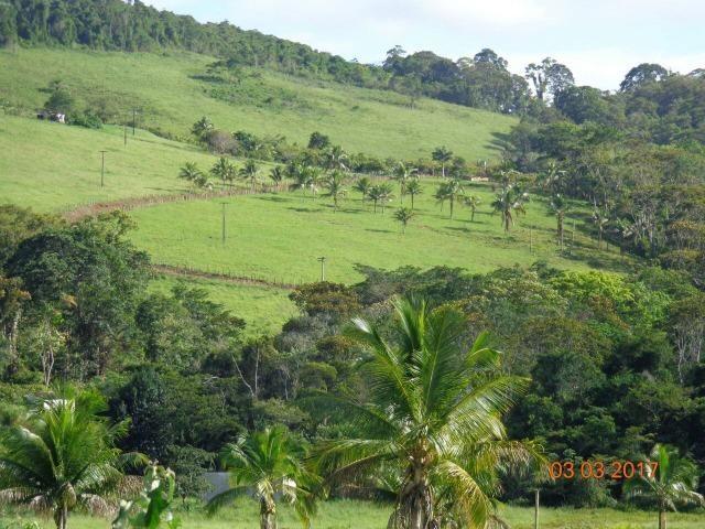 Vende fazenda de Cacau com 278 Ha - Camamu - BA - Foto 7