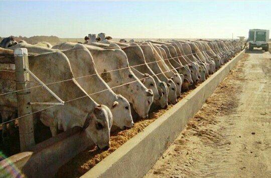 Confinamento bovino e outros! - Foto 2