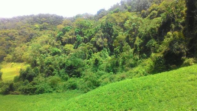 Lindo terreno de 2,8 hectares em Delfim Moreira Sul de Minas Gerais - Foto 7