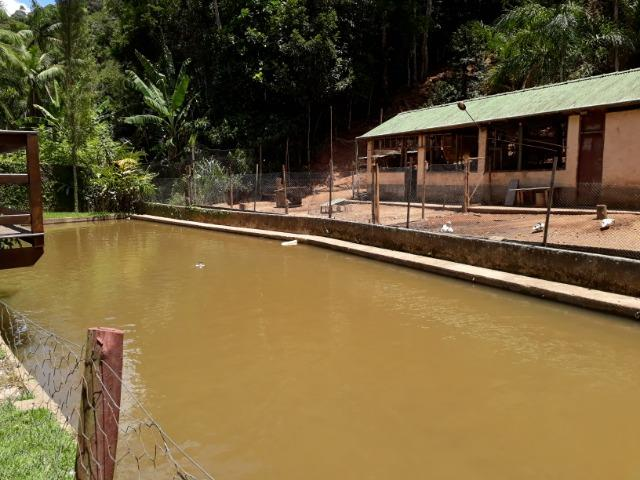 Marechal Floriano - sitio a 6 km da cidada - Foto 20