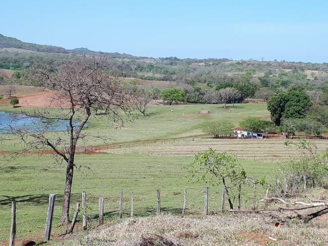 Fazenda em Campo Grande 4mil hectares!! - Foto 20