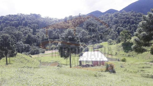 Fazenda de 100 alqueires paulistas, Campina Grande do Sul / PR - Foto 15