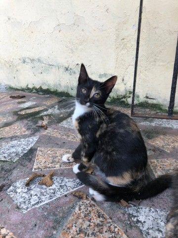 Doação de gatinha - Foto 2