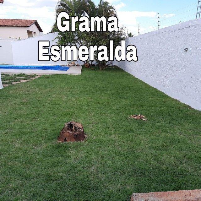 Grama são Carlos,Grama Esmeralda  - Foto 4
