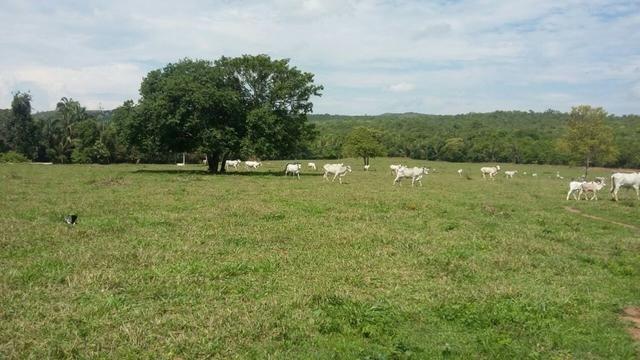 Fazenda 3288 ha terra Rosario Oeste MT braquearia 2020 cab boi R$ 6 mil reais p ha - Foto 2