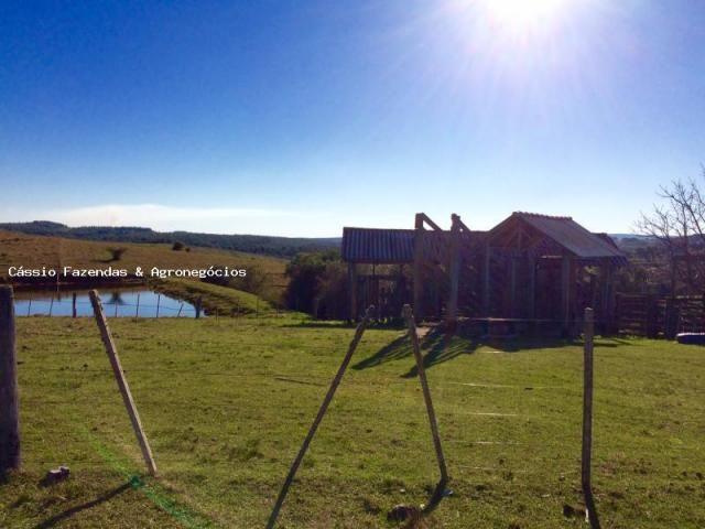 Fazenda para venda em encruzilhada do sul, interior - Foto 16