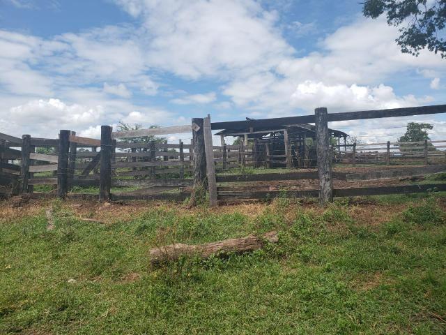 Fazenda 1.240 hectares á venda em jangada - Foto 7