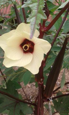 Coleção de sementes, sementes raras, sementes orgânicos, pancs, comestíveis e medicinais