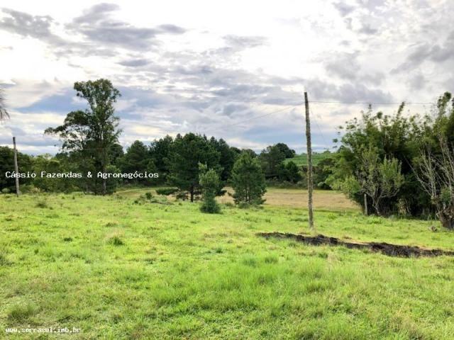 Fazenda para venda em encruzilhada do sul, interior - Foto 6