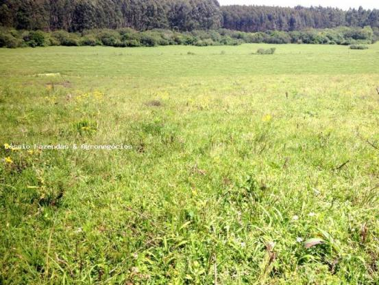Fazenda para venda em encruzilhada do sul, interior - Foto 3