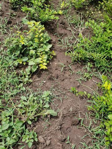 Fazenda 1.240 hectares á venda em jangada - Foto 5