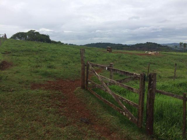 Fazenda rural à venda em Roncador - PR - 52 alqueires. - Foto 8