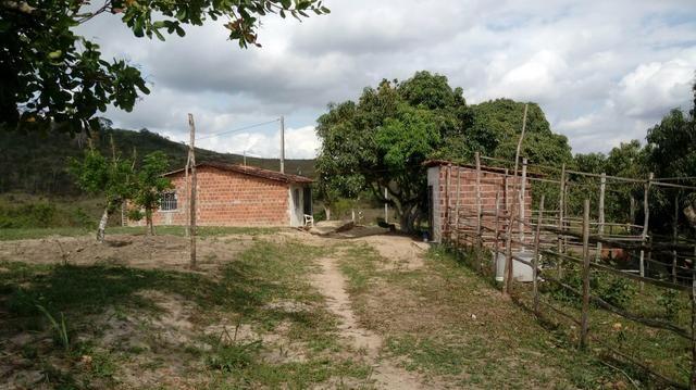 Sitio , fazenda, chácara - Foto 6
