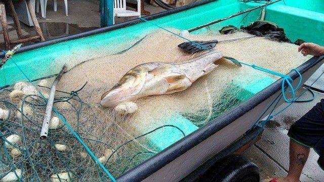 Barco batera bote lancha de fibra  - Foto 4