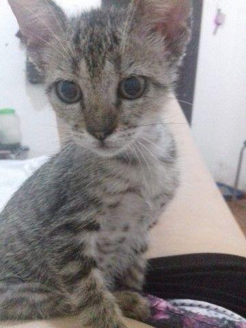 Doa-se gatinha filhote - Foto 4