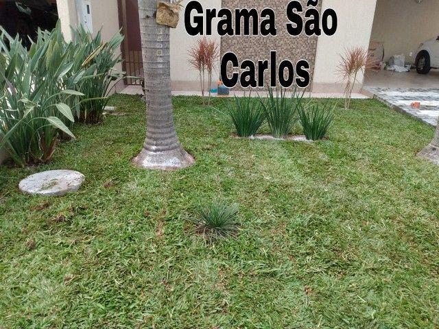 Grama são Carlos,Grama Esmeralda  - Foto 2