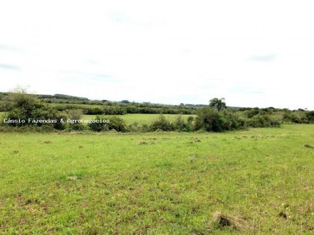 Fazenda para venda em encruzilhada do sul, interior - Foto 5