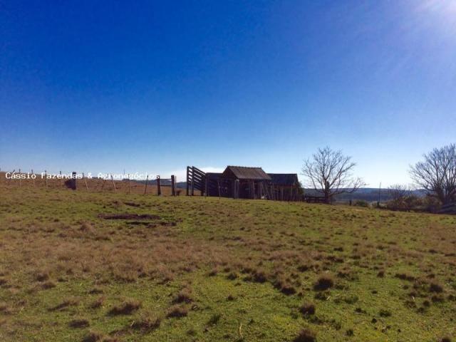 Fazenda para venda em encruzilhada do sul, interior - Foto 13