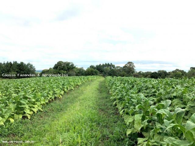 Fazenda para venda em encruzilhada do sul, interior - Foto 10