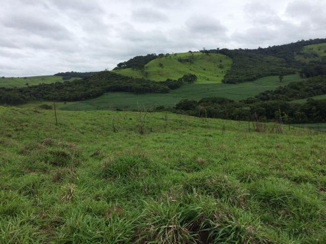 Fazenda rural à venda em Roncador - PR - 52 alqueires. - Foto 9