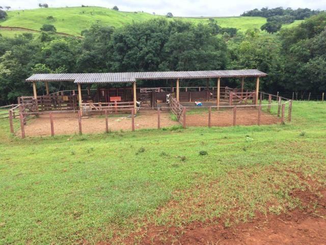 Fazenda rural à venda em Roncador - PR - 52 alqueires. - Foto 4