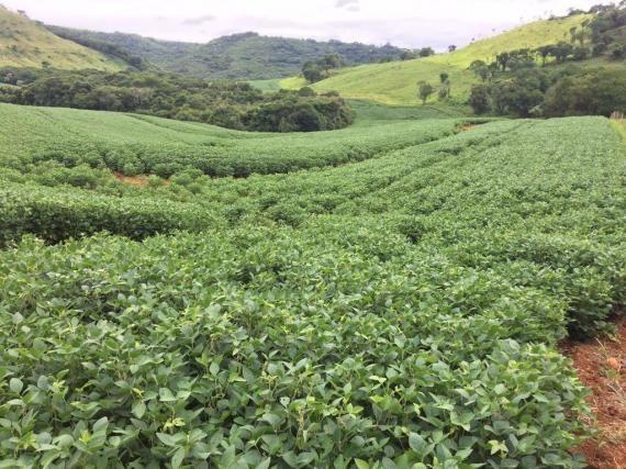 Fazenda rural à venda em Roncador - PR - 52 alqueires.
