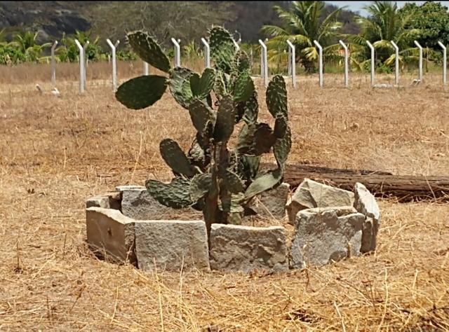 Terreno Lote Chácara CARUARU - Foto 7