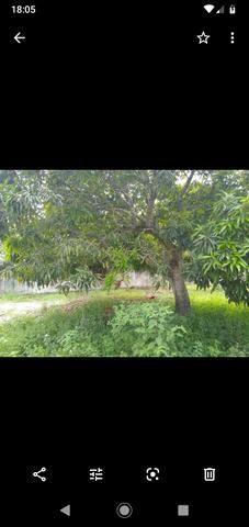 Terreno Em GUARAJUBA Localizado - Foto 6