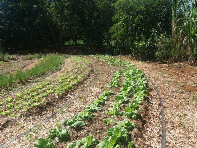 Vendo chácara de 7 hectares com 2 casas 1 cozinha caipira com fogão de lenha - Foto 4