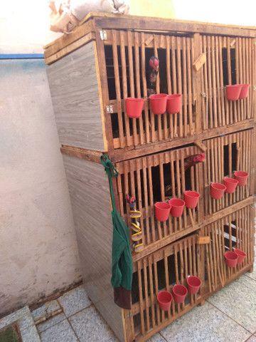 , gaiola com 6 repartimentos - Foto 3