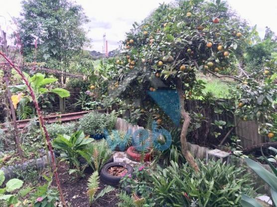 Casa à venda com 3 dormitórios em Cidade industrial, Curitiba cod:CA00600 - Foto 16