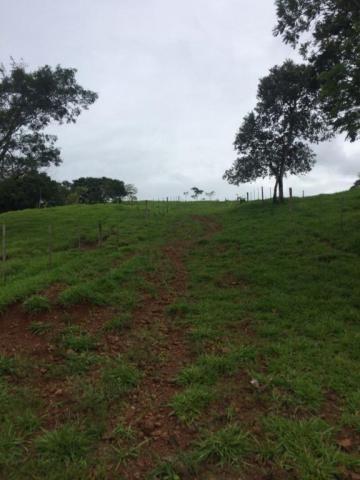 Fazenda rural à venda em Roncador - PR - 52 alqueires. - Foto 2